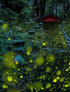 long exposure photography of fireflies in Japan