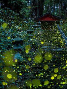 Fotos surreales de las luciérnagas de Japón en verano de 2016