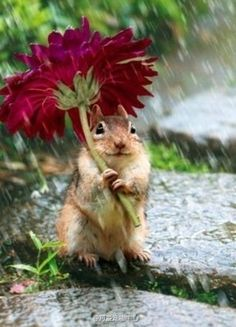April Showers bring... The squirrels?