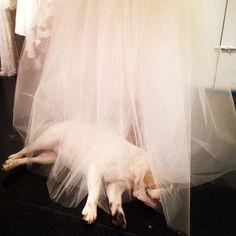 #Jonesy in the #Houghton #atelier during #FW15 #bridal #fittings