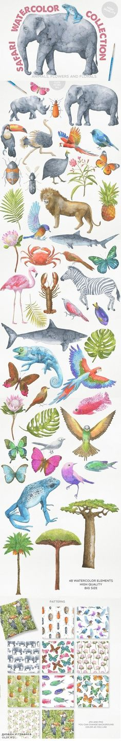 Safari Watercolor Collection 575563