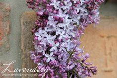 lilac wreath Our Wedding, Wedding Ideas, Lavender Wreath, Nature Decor, Wisteria, Diy Projects To Try, Purple Flowers, Provence, Farming