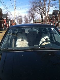 4 dogs chillin in a car