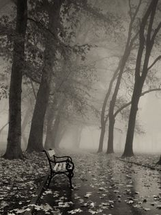 BENCH, BY ITAN14 --- this is one of my most favorite photographs I've ever pinned; there is just something about it that makes it so beautiful and so sad at the same time.