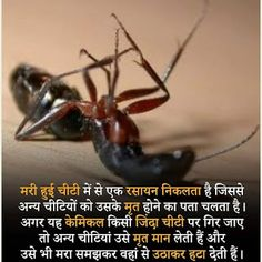 Facts, amazing facts in Hindi aap log jaroor jaane Interesting Science Facts, Some Amazing Facts, Amazing Science Facts, Unusual Facts, Interesting Facts About World, Unbelievable Facts, Amazing Things, Fun Facts About Animals, Animal Facts