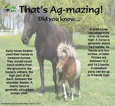 Did you know. Horse heights and hand measurements