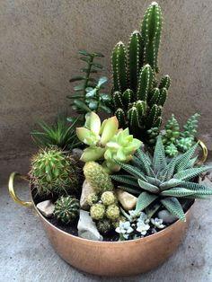 Indoor Cactus Garden, Mini Cactus Garden, Planting Flowers, Plants, Indoor Garden, Succulents, Succulents Garden, Indoor Cactus, Mini Garden