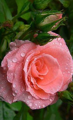World of Flowers - Comunidade - Google+