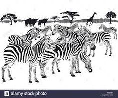 EPS Vector of herd of zebras - Search Clip Art . Zebra Kunst, Zebra Art, Zebras, Zebra Clipart, Zebra Pictures, African Quilts, Outdoor Wall Art, Vector Graphics, Eps Vector