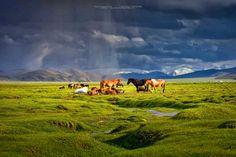 Mongolia.