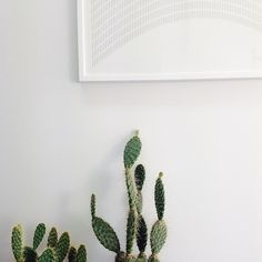 Studio vignette #pricklypear #cacti #ineednicethings #interior #design @ineednicethings #wearehuntly  http://www.wearehuntly.com.au