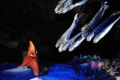 Antzezlaneko protagonistetako batzuk, begidun itsas-izarra eta sardinak.