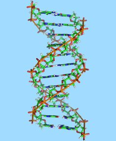 Duons: Researchers Find Second Code Hiding Within DNA: A large team of scientists led by Washington University geneticist Dr John Stamatoyannopoulos has found a 'secret' second code hiding within human DNA. From Sci-News.com