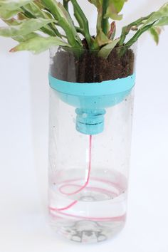 DIY Self Watering Pl