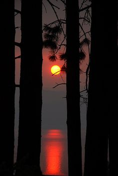 Sunset through the trees. Flathead Lake, Montana.