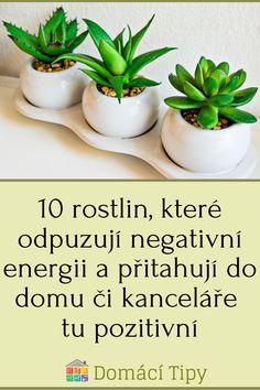 10 rostlin, které odpuzují negativní energii a přitahují do domu či kanceláře tu pozitivní Indoor Plants, Planter Pots, Gardens, House, Inside Plants, Outdoor Gardens, Garden, House Gardens