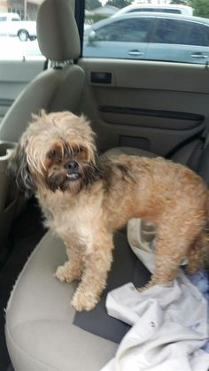 Found Dog - Unknown - Lawrenceville, GA, United States