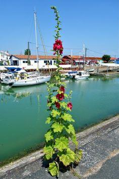 Roses trémières, Fort Louvois, jolies boutiques... ce blog vous recommande plusieurs étapes incontournables en Charente-Maritime !