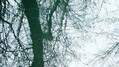 """""""Brief an D. Geschichte einer Liebe"""". Von André Gorz. Aus dem Französischen von Eva Moldenhauer, gelesen von Joseph Lorenz. Outdoor, Nature, Great Love, Death, History, Outdoors, Outdoor Games, The Great Outdoors"""