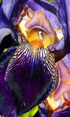 Intimate #Iris by Michele Avanti