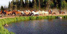 More Dude Ranches.