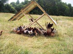 pasture housing chickens