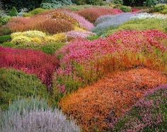 Heaths and heathers. Amazing colors and textures.