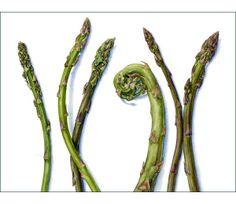 Green and Black Asparagus - Asuka Hishiki Botanical Art Works