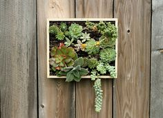 Succulents hanging planter... great for pallet boards, reclaimed wood, scrap wood, some chicken type wire, soil, and plants.... our local flea market as well as the local nursery sell these types of plants... cute and whimsical and hard to kill! Would look great on a reclaimed section of old fencing leaned anywhere in the garden, cute if you have a sunny porch or patio...
