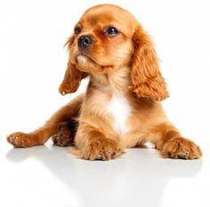 Buenos días! Feliz inicio de semana   #PetsWorldMagazine #RevistaDeMascotas #Panama #BuenosDias #Mascotas #MascotasPty #PetsMagazine #MascotasAdorables #Perros #PerrosPty #PerrosPanama #Pets #PetsLovers #Dogs #DogLovers #DogOfTheDay #PicOfTheDay #Cute #SuperTiernos