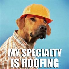 """Man's best friend is an expert at """"Roofing""""! More funny roofing memes to come from IKO Shingles! Weekender, Pekinese, Funny Puns, Funny Stuff, Funny Things, Funny Shit, Dog Stuff, Funny Quotes, Bad Puns"""