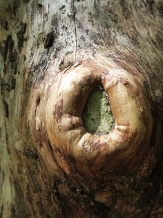 A hole in an old tree waiting for birds to nest in her hotel-Marianne Baan-2015