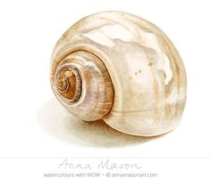 How to paint a realistic shell in watercolor by Anna Mason Watercolor Sea, Watercolour Painting, Painting & Drawing, Watercolours, Shell Drawing, Simple Watercolor, Watercolor Video, Watercolour Tutorials, Watercolor Techniques