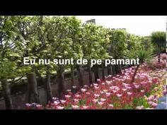 EU NU SUNT DE PE PAMANT !-negativ cu vers Plants, Self, Plant, Planets