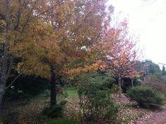 Autumn at  Carrara.