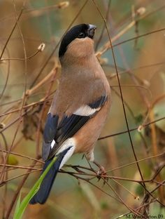 Pretty Birds, Beautiful Birds, Animals Beautiful, Nature Animals, Animals And Pets, Cute Animals, Rare Birds, Exotic Birds, Tropical Birds