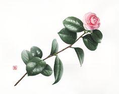 - Camellia japonica 2014 - Pascal Brault