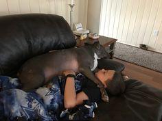 Best Friend Nap Time