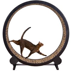 Cat Exercise Wheel by One Fast Cat