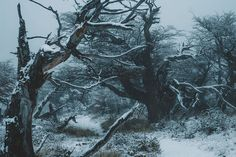 Forest of Dune Eddard Stark, Chronicles Of Narnia, The Witcher, Story Inspiration, Fantasy World, Skyrim, Cybergoth, Scenery, Pictures