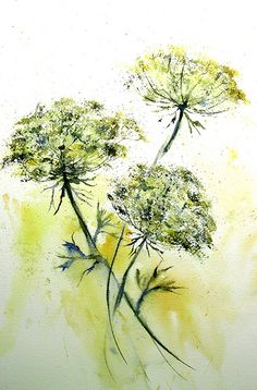 Queen Anne's Lace  ~ Lin Frye