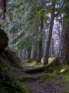 Balade a Paimpont, forêt de Brocéliande Forest Path, Tree Forest, Forest Trail, Beautiful Forest, Beautiful Places, Nature Pictures, Cool Pictures, Paradise On Earth, Life Is A Journey