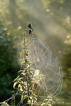 Spiders web on a meadow at sunrise by Aniszewski, via Dreamstime