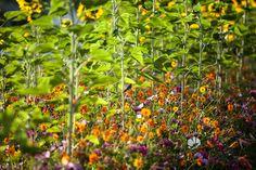 Sunflowers | Nickel & Nickel flowers