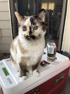 These pretty cats will bring you joy. Cats are incredible companions. Pretty Cats, Beautiful Cats, Animals Beautiful, Cute Kittens, Cats And Kittens, Siamese Cats, I Love Cats, Cool Cats, Animals And Pets
