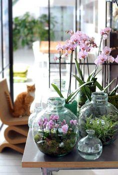 Comment Faire Refleurir Les Orchid Es Blanches Pour Les Utiliser Comme Une Revrerie