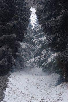 'HOLY TREE' von photofiction bei artflakes.com als Poster oder Kunstdruck $24.96