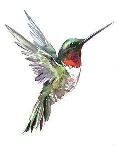 Watercolor Hummingbird, Hummingbird Art, Watercolor Bird, Watercolor Paintings, Hummingbird Pictures, Bird Drawings, Animal Paintings, Painting Inspiration, Painting & Drawing