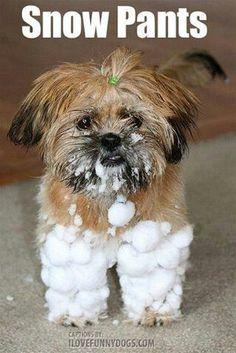 Shih Tzu snowpants
