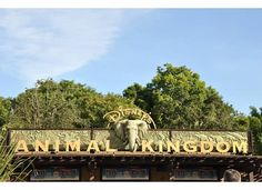 dixie delights: what to do at Animal Kingdom